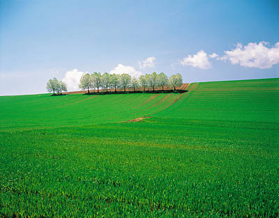 Trees Lined In Crop Field With Sky Poster by Panoramic Images