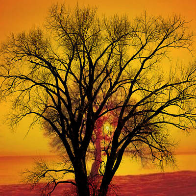 Trees Of Gold Poster by Marty Koch