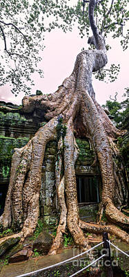 Trees Of Ta Prohm Poster