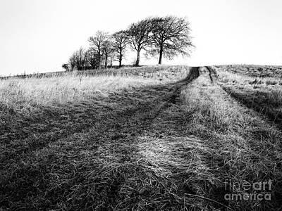 Trees On A Hill Poster by John Farnan