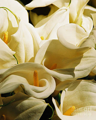 Tribute To Georgia O'keefe Poster