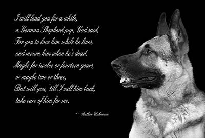 Tribute To German Shepard Poster