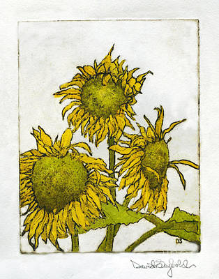 Triple Sunflowers Etching Poster by John Stephens