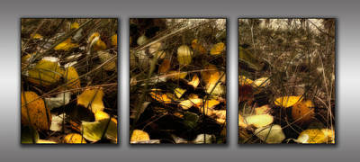 Triptych - Autumn Forest Floor Poster by Ellen Heaverlo