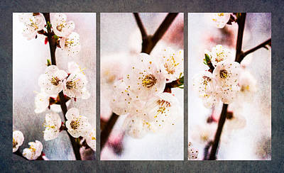 Triptych Light Of Spring 1 Poster