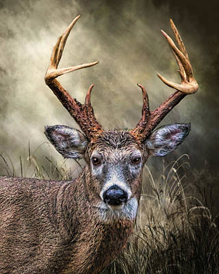 Poster featuring the digital art Trophy 10 Point Buck by Mary Almond