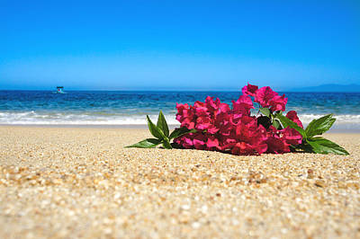 Tropical Beach Flowers Poster