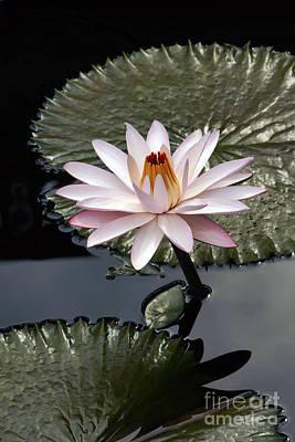 Tropical Floral Elegance Poster by Byron Varvarigos