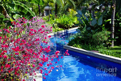 Tropical Garden Around Pool Poster by Kaye Menner