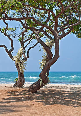 Tropical Heliotrope Trees With White Orchids On Beach Poster