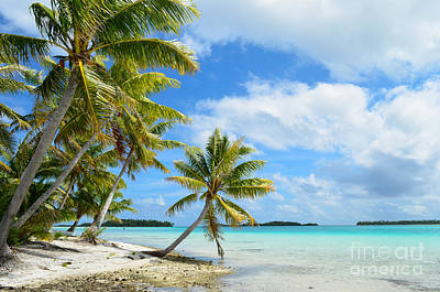 Tropical Beach With Hanging Palm Trees In The Pacific Poster