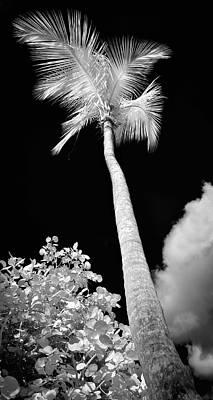 Tropical Palm St. John Poster by Luke Moore