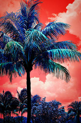 Tropical Red Poster by Laura Fasulo