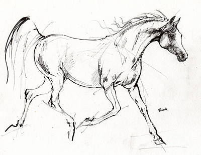 Trotting Arabian Horse Quick  Sketch Poster by Angel  Tarantella