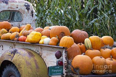 Truckful Of Pumpkins Poster
