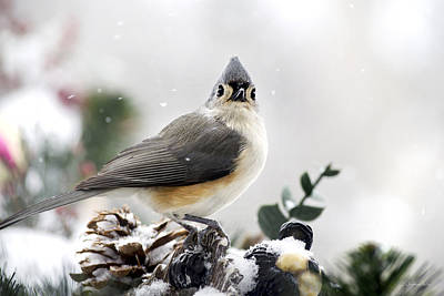 Tufted Titmouse In The Snow Poster by Christina Rollo
