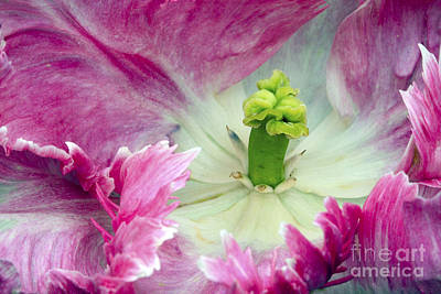 Tulip - 853 Poster by Paul W Faust -  Impressions of Light