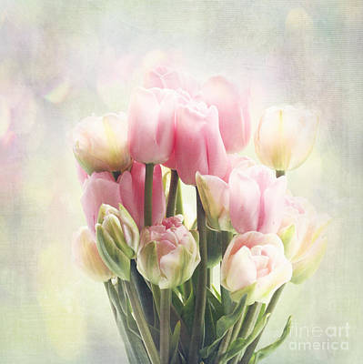 Tulip Bouquet Poster by Sylvia Cook