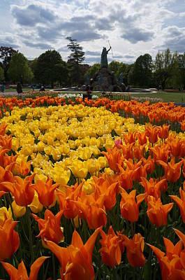 Tulip El Nino And Yellow Lily A Poster