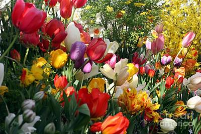Poster featuring the photograph Tulip Festival by Mary Lou Chmura