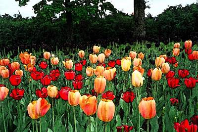 Poster featuring the photograph Tulip Festival  by Zinvolle Art