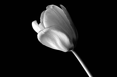 Tulip Poster by Marwan Khoury