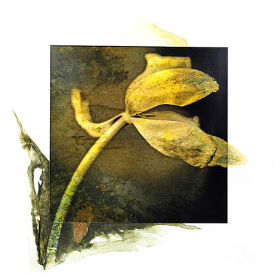 Tulip On A Textured Brown Background. Poster by Bernard Jaubert