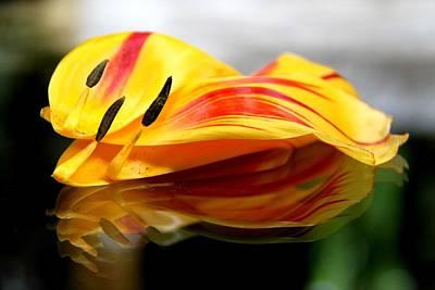 Tulip Reassembled Poster