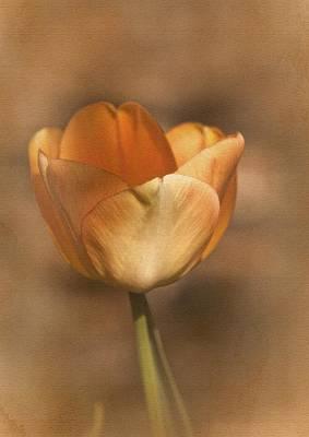 Tulip Tango Poster by Richard Cummings