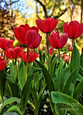 Poster featuring the photograph Tulip Time by Peggy Hughes