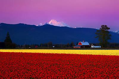 Tulip Twilight Poster