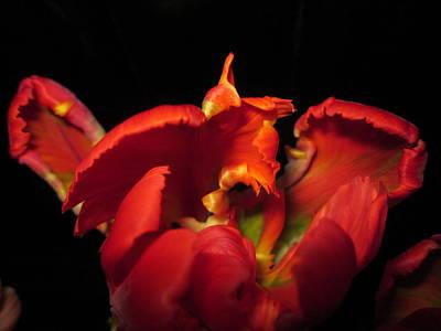 Tulipmelancholy Poster