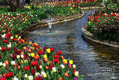 Tulips Around The Pond Poster by Kaye Menner