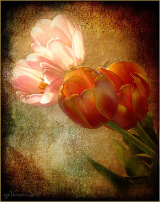 Tulips Poster by Bill Voizin