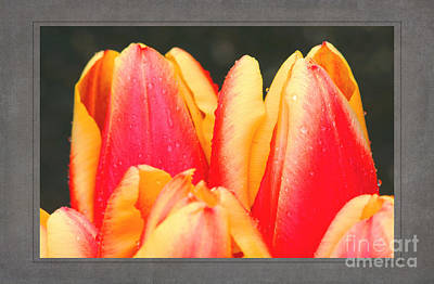 Tulips Poster by David Birchall