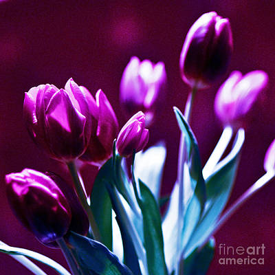 Tulips In Purple Poster