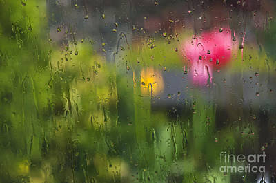 Tulips Through The Rain Poster by Maria Janicki
