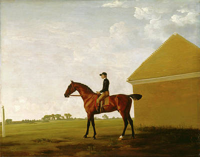 Turf, With Jockey Up, At Newmarket Portrait Of Turf Poster