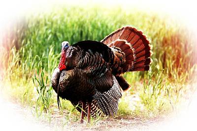 Poster featuring the photograph Turkey At Sunrise by Shirley Heier