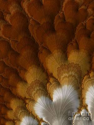 Turkey Tail Feathers  Poster by Heidi Smith