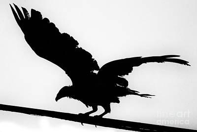 Turkey Vulture Silhouette-texas Poster by Douglas Barnard
