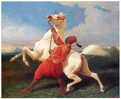 Turkish Groom Holding An Arab Stallion Poster