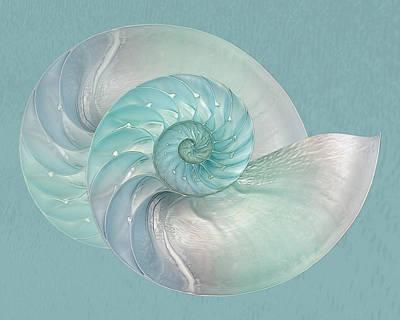 Turquoise Nautilus Pair Horizontal Poster by Gill Billington