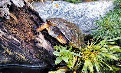 Poster featuring the photograph Turtle 1 by Dawn Eshelman