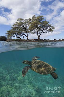 Turtle At Makena Landing Poster