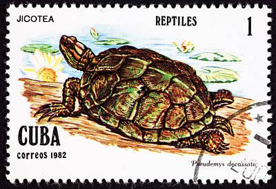 Turtle Jicotea North Antillean Slider Trachemy Poster by Jim Pruitt
