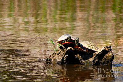 Turtle Log Poster by Stuart Mcdaniel