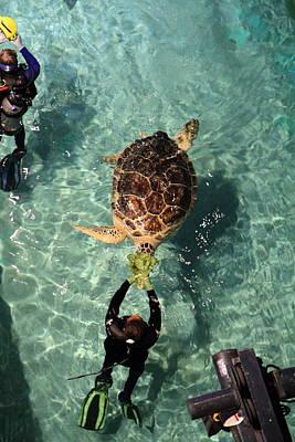 Turtle - National Aquarium In Baltimore Md - 121215 Poster