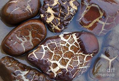 Turtle Or Stone Poster by Kathi Mirto