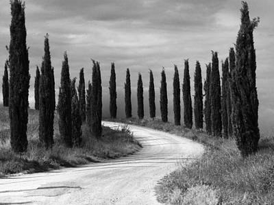 Poster featuring the photograph Tuscan Cedars by Hugh Smith